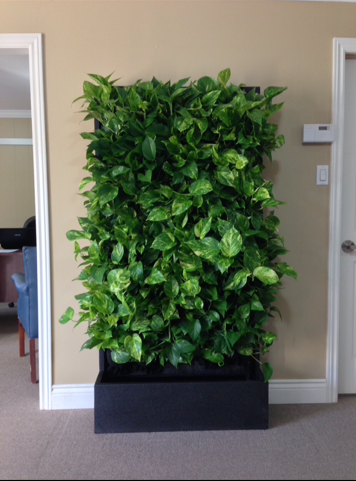The Beautiful Benefits of Living Walls