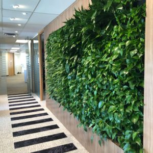 Green Wall Design